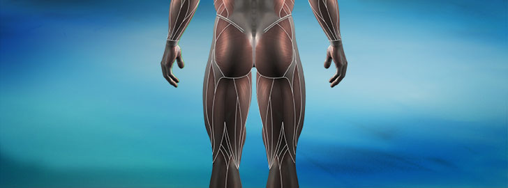 Electrode Placements - Lower Body