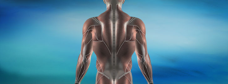 Electrode Placements - Upper Body